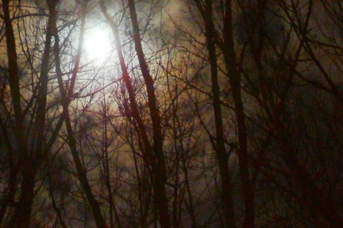 moon through the branches